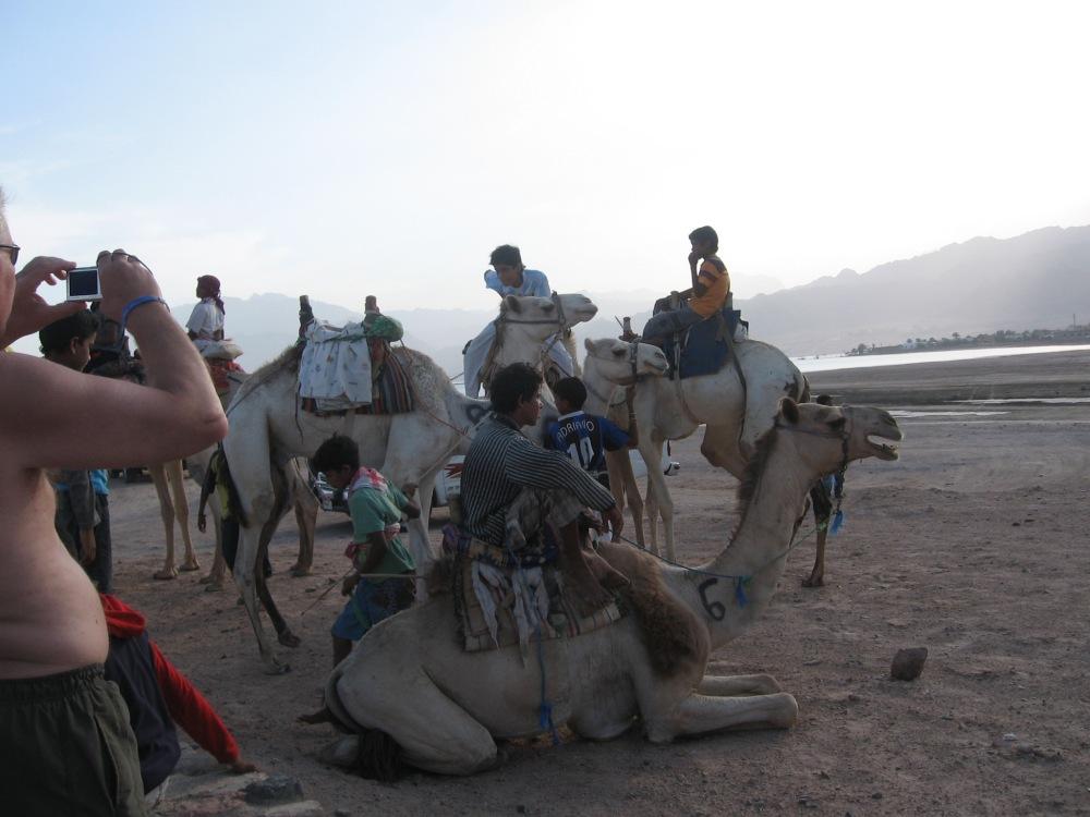 Camel Race Dahab Festival and Dahab Bedouin Festival 2011
